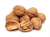 Common Walnut (juglans Regia)