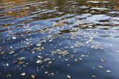 Beautiful water with autumn leaves