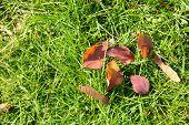 Beautiful autumn leaves on green grass