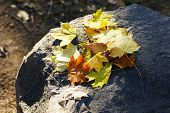 Beautiful autumn leaves on stone