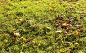 Beautiful autumn leaves on grass