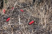 stock photo of cartridge  - Spent shotgun cartridges laying sparely on the ground - JPG