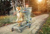 Boy Walk With Dog In Shopping Trail