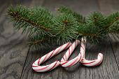 Candy Canes Fir Spruce Twigs
