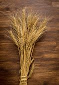 stock photo of spike  - Wheat spikes on dark wooden board with copy space - JPG