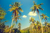 pic of tree lined street  - Nice asfalt road with palm trees against the blue sky and cloud - JPG