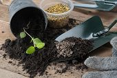 pic of household farm  - gardening tools with seeds on black soil - JPG
