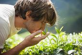 pic of cameron highland  - Young Man on Tea Plantation Smelling Fresh Tea Leaves - JPG