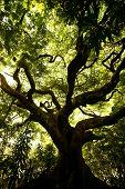 Crawling Tree