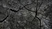 stock photo of decomposition  - Texture of wood 