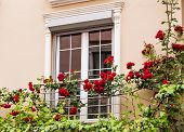 picture of english cottage garden  - Old Sash Windows with Window Box Gardens of a Old English Town House - JPG