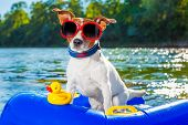 stock photo of toy dogs  - jack russell dog sitting on an inflatable mattress in water by the sea river or lake in summer holiday vacation rubber plastic toy included - JPG
