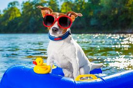 foto of toy dog  - jack russell dog sitting on an inflatable mattress in water by the sea river or lake in summer holiday vacation rubber plastic toy included - JPG