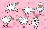 sheep in love