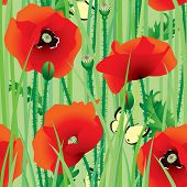 Vector seamless of scarlet poppy with butterfly