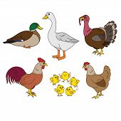 Farm Animals Set, Vector With Chicken Family And Farm Items. At The Farm. Set Of Domestic Birds. Cut poster