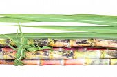 Sugar Cane, Sugarcane Heap And Leaves, Pile Of Cane, Sugarcane Piece Fresh, Sugar Cane On White Back poster