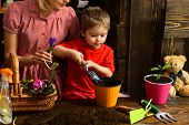 Growing Concept. Little Child Plant Flower In Pot With Dirt Or Soil, Growing. Pot Plant Growing. Act poster