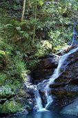Kondalilla Falls Sunshine Coast Hinterland