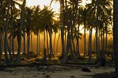 Sunset In Tropical Nature Landscape. Palm Trees Silhouettes Landscape. Ocean Nature In Sunset. Natur poster