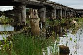 stock photo of sand lilies  - Old wooden bridge green grass reflections in water - JPG