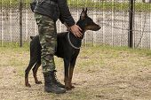 Training Dog Doberman Girl In Military Clothes. The Dog On The Border Guard. The Border Guard With A poster