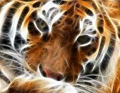 Tiger Fractal Portrait