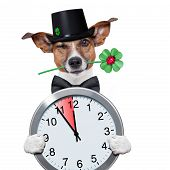 stock photo of sweeper  - good luck chimney sweeper dog with hat and clock - JPG