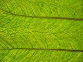 leaf bottom