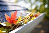 stock photo of gutter  - Rain gutter full of autumn leaves - JPG