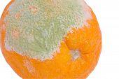 Schimmel auf einer orange