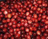 Fresh Cranberries