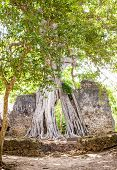 image of watamu  - Gede ruins in Kenya are the remains of a Swahili town typical of most towns along the East African Coast - JPG