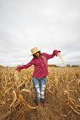 Model Scarecrow in Fall Field