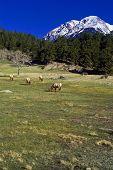 A Rocky Mountain Morning