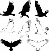 image of hawk  - silhouette of hawk and eagle  - JPG