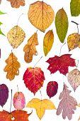 Loose Autumn Leaves
