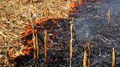Corn Field Fire