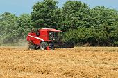 Thresher Harvesting Wheat