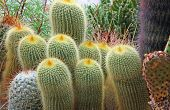 Mix Of Many Succulents And Cactus With Very Sharp Prickles And Thorns Of The Desert Plants