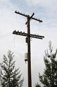 Barren Utility Pole