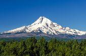 Majestic Mt. Hood
