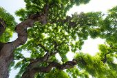 picture of elm  - Beautiful - JPG