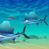 image of sailfish  - school of sailfish floating above sand seabed - JPG