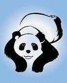 panda  sleeping on a blue background