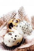 Raw Quail Eggs With Feathers Isolated On White Background Close Up. Hq Photo Of Quail Eggs With Copy