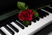 Piano Keys And Rose Flower