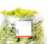 pic of iceberg lettuce  - iceberg lettuce in plastic bag package with price tag - JPG