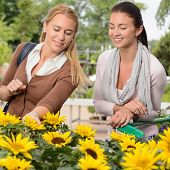 Two woman customers shopping for sunflowers in garden center
