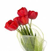 Bouquet of red tulips is decorated by gossamer